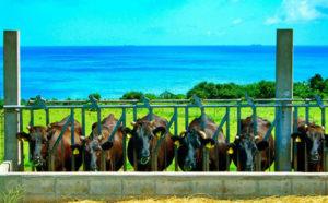 世界の指導者たちを唸らせた「石垣牛」を紹介します!